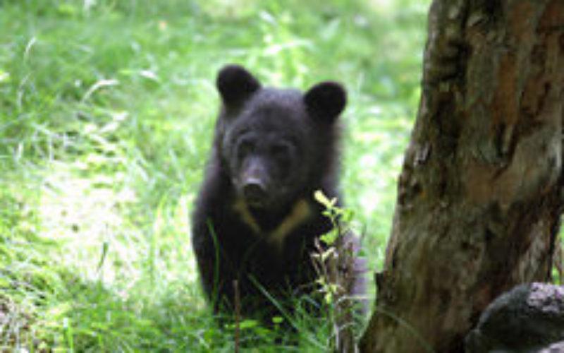 ハイキングに行って出会い頭に会って困るのは熊と蜂と蛇のどちら