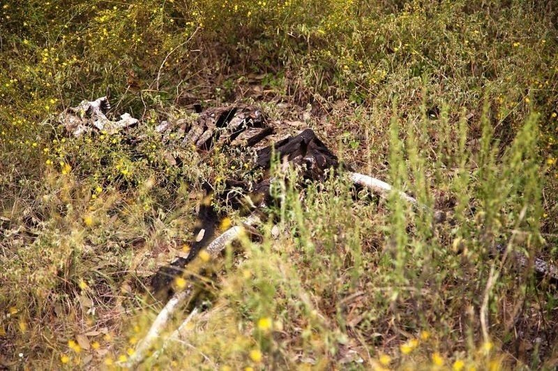 大分県別府市浜脇の山林で白骨化した女性らしき遺体