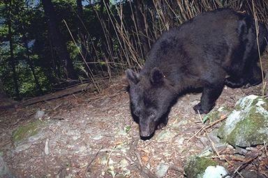 東京にある飲食店で野生の熊が倉庫で食べ物を物色