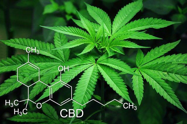 専門家が警鐘を鳴らす大麻は幻覚や幻聴を起こす覚醒剤と同じ薬物