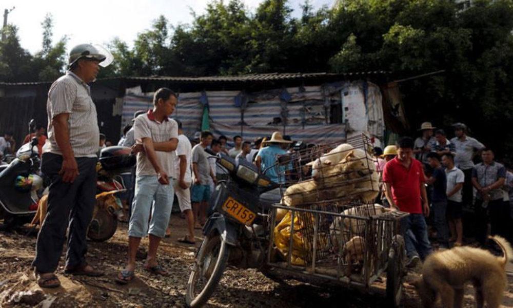 中国の全人代でコロナウイルスの感染源となった野生動物の食用を禁止決定