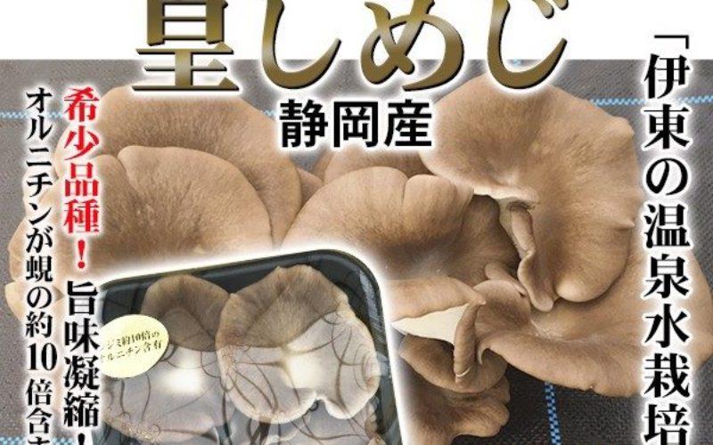 静岡県伊東市にあるキノコ栽培の石井農園が5億4000万円の負債で倒産