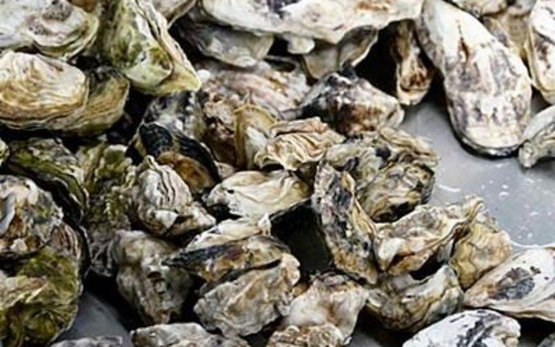 淡路島の海域で牡蠣を密猟していた水産業の男らを逮捕