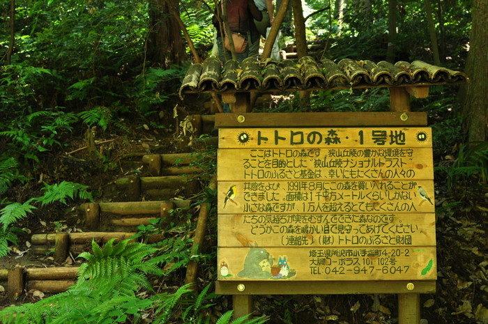 埼玉県所沢市上山口の雑木林に死後数年が経過している不明な人骨?