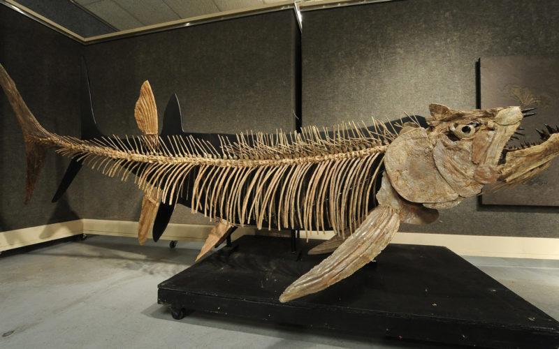 アルゼンチン南部のパタゴニアで全長6メートルの巨大魚の化石を発見