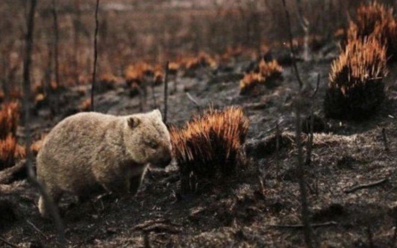 豪州の森林火災に巻き込まれた野生動物が30億匹焼死する被害
