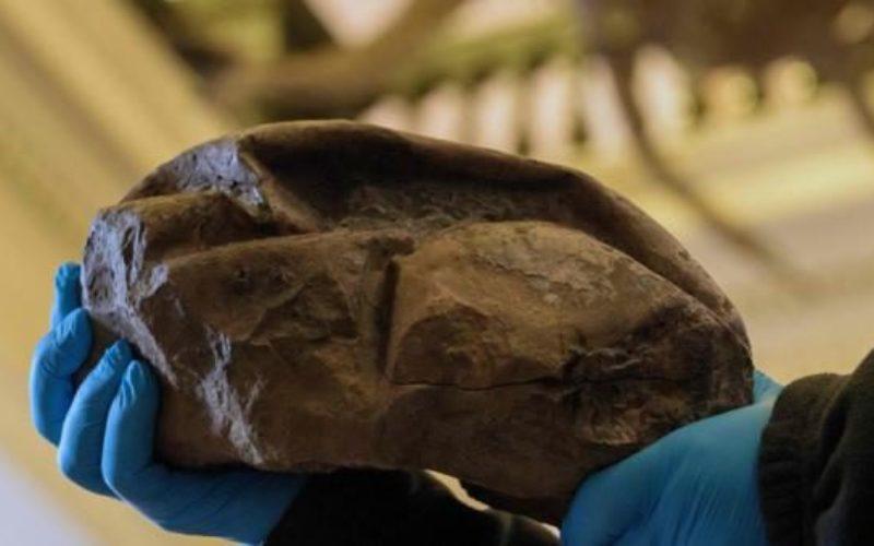 南極大陸で6800万年前に生息していた大型爬虫類の卵の化石を発見
