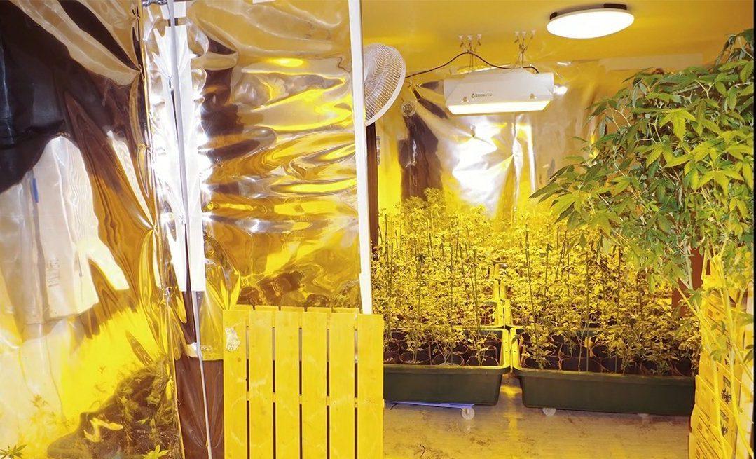 マンションで大麻を栽培して密輸していた元国税局の職員らを逮捕