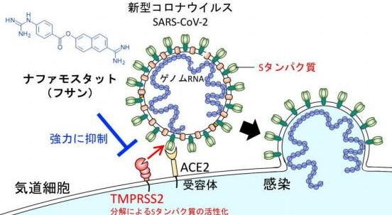 中国でコロナウイルスに有効なワクチンが開発され医療従事者から投与