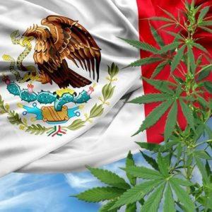 メキシコで大麻の合法化に向けて議論され賛成多数で法案を可決