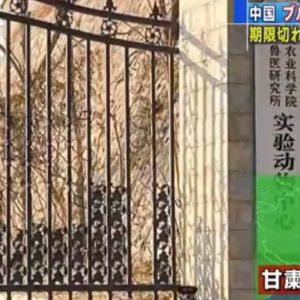 中国で動物用のブルセラ菌が漏洩し周辺住人の3000人に感染