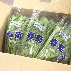 福岡市のJAくるめが出荷した春菊から基準値の180倍の農薬