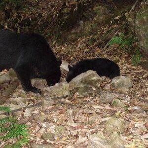 北海道南部地域にある福島町で熊に襲われた一部分の女性遺体